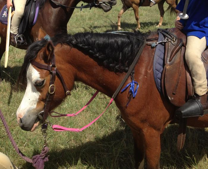 Flashy Welsh Pony