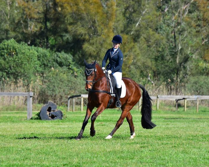 Sweet Warmblood x AUS Stock Horse