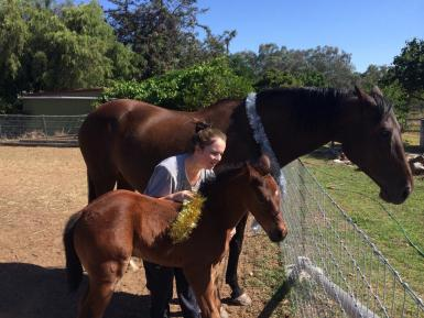 Christmas 2015 with foal at foot