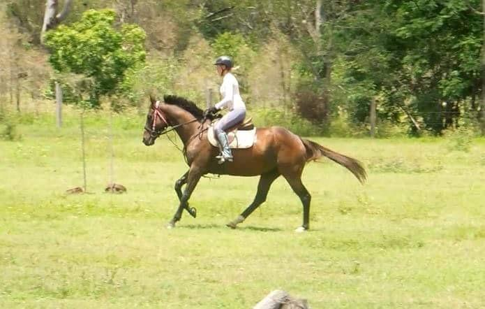 Striking gelding, beautiful to ride