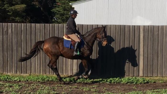 Athletic and talented TB Jumping mare