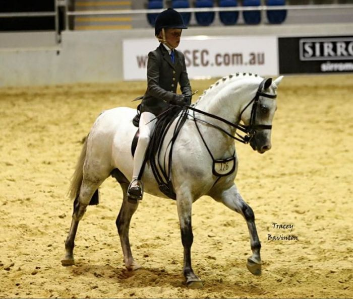 Show Hunter Pony Nationals Qualified 2013/2014