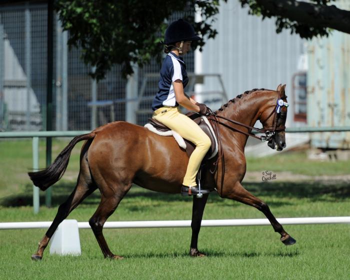 Mirinda Maid Marion Show Pony Mare