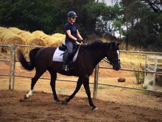 Black warmblood gelding: lead / trail riding