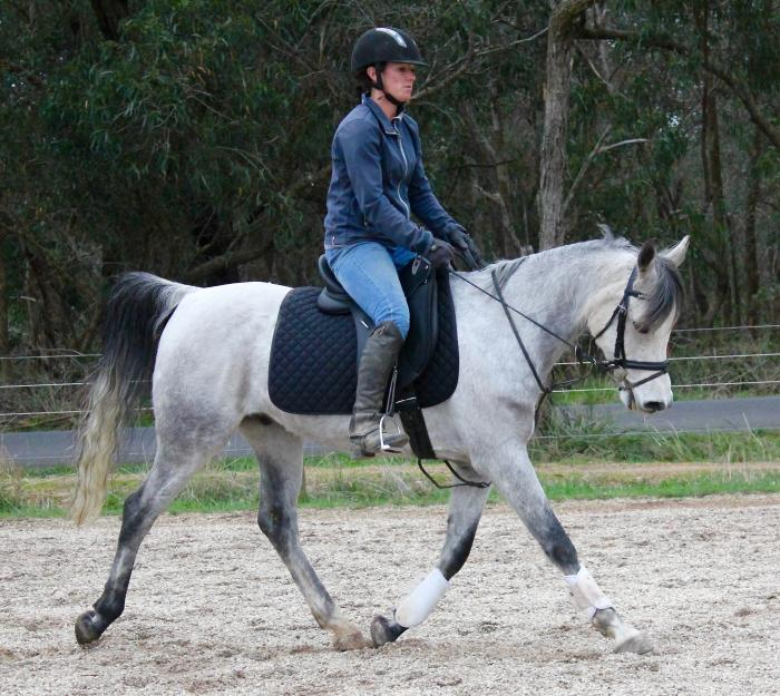 Lovely Arabian Gelding For Sale