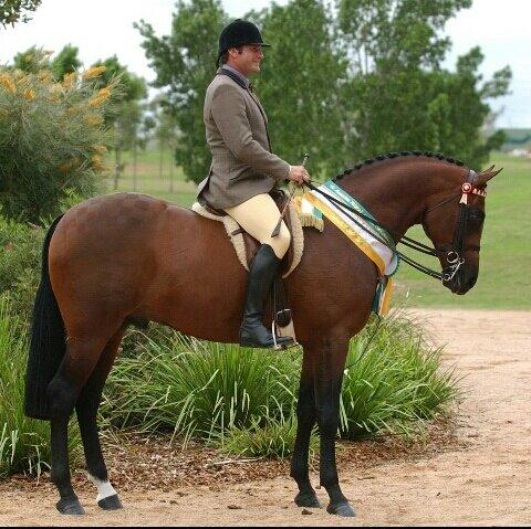 Warrawee S'preem Service Fee - Young Dressage