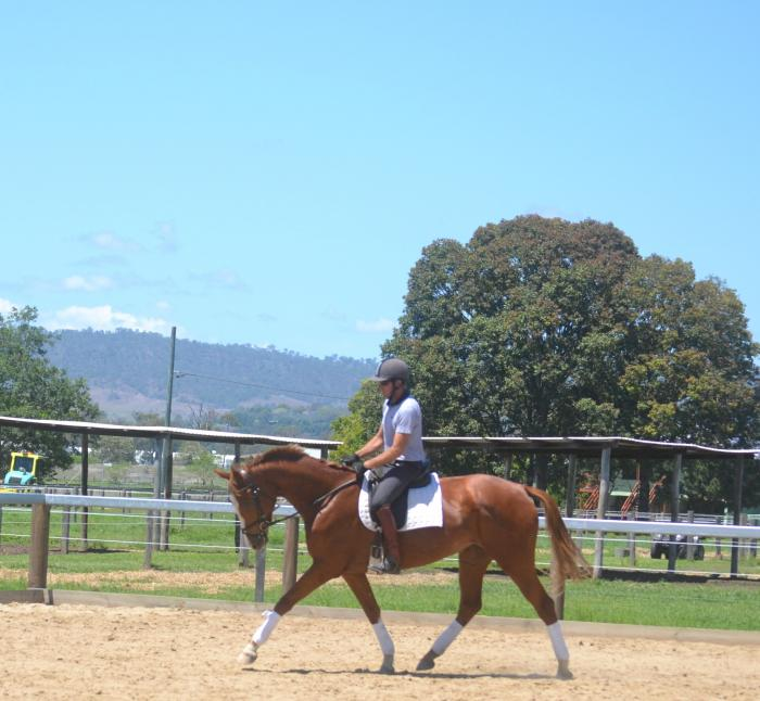 Uncomplicated green dressage propspect