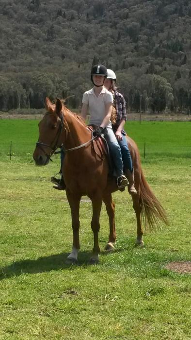 Beautiful solid gelding for the whole family