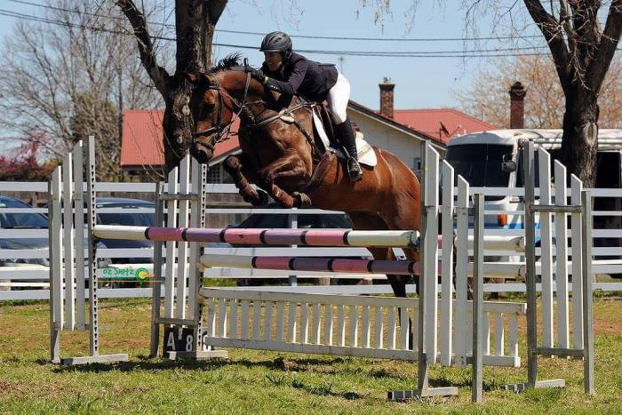 Eye catching talented & scopey WB gelding