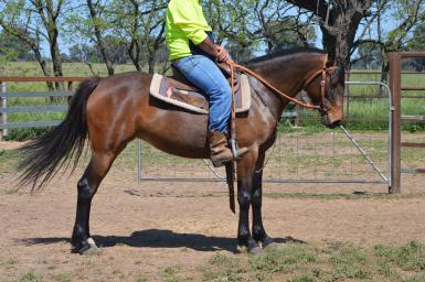 Ash filly with heaps of potential