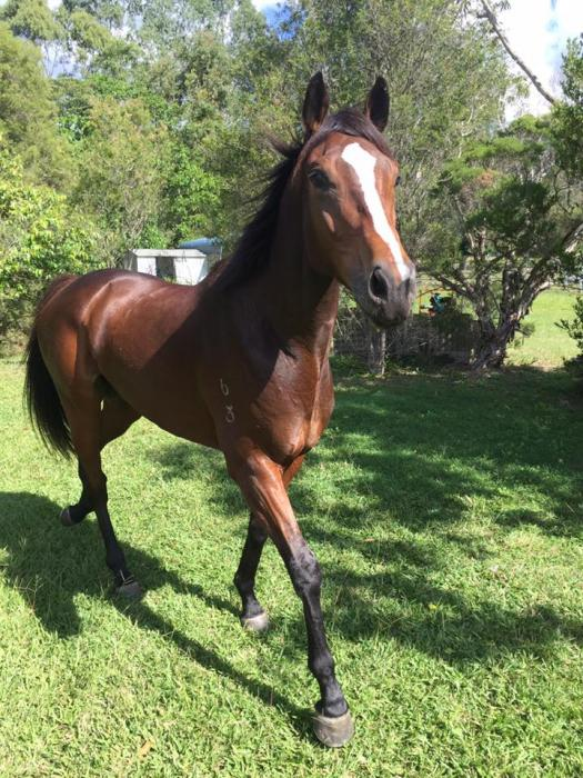 Eye catching gelding