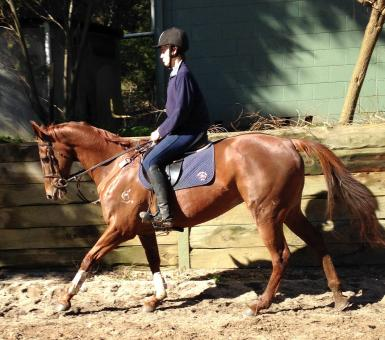 Dressage and Showjumping