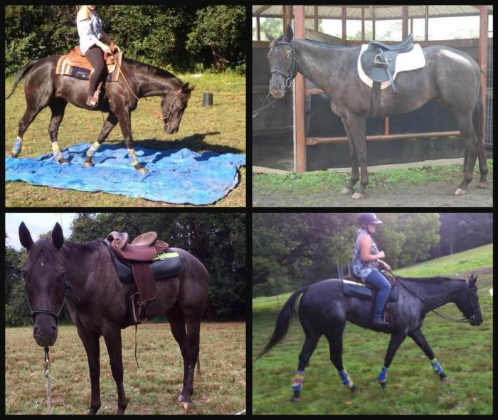 Knk Spot on Midnight-Registered Appaloosa Gelding