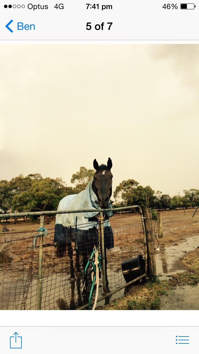 Project gelding for very experienced home only!