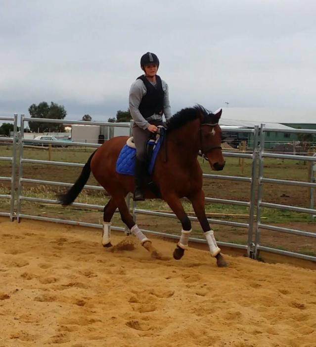 Beautiful, willing & quiet TB mare, 16hh 6yo
