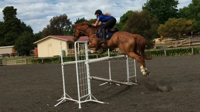 Experienced Show Jumper