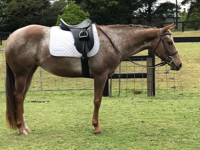 One Radalicious Time - lovely 4 yr Mare
