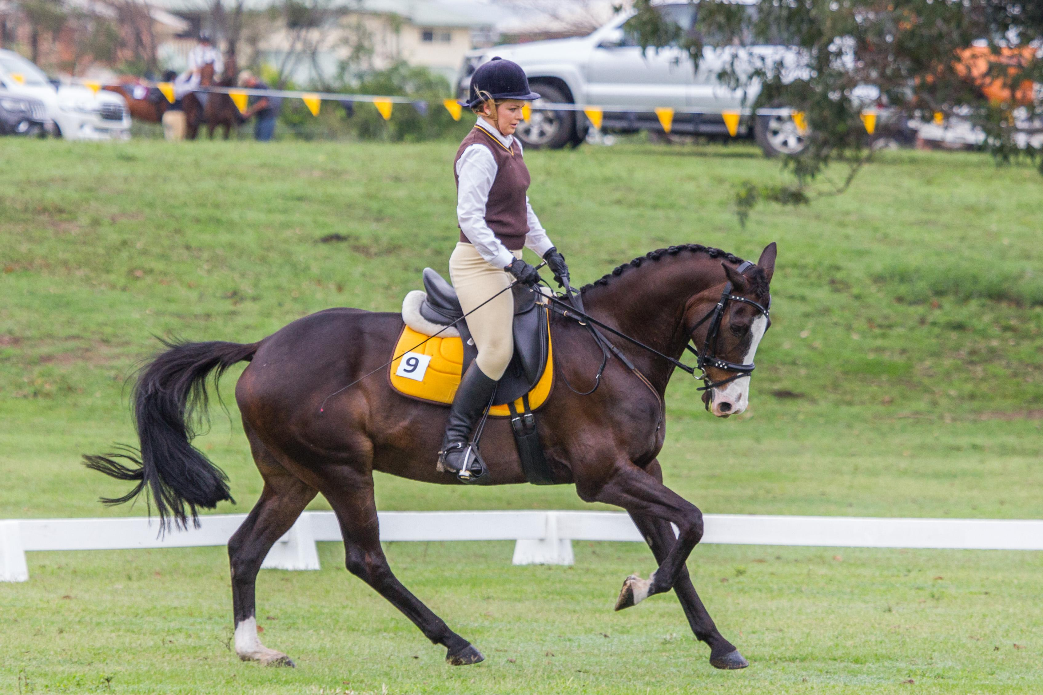 Eye-catching Dressage / Interschool Gelding