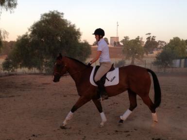 Going kindly under saddle