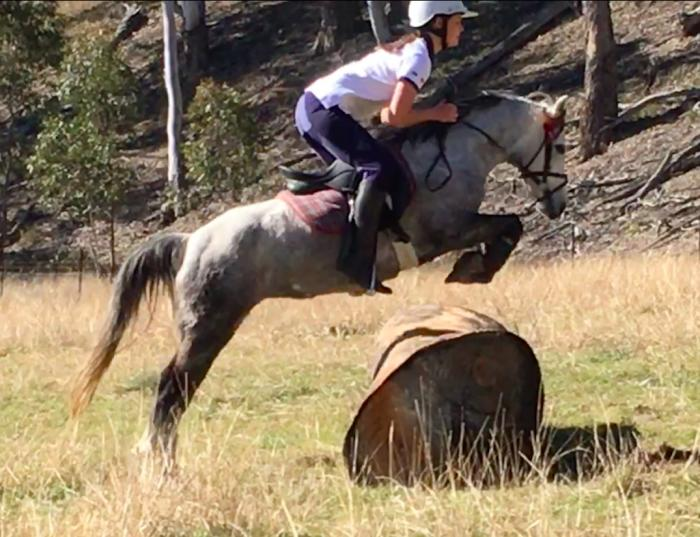 Loves to jump! Competitive pony
