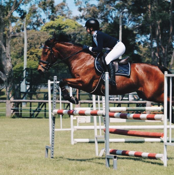Connemara/TB Showjumping Pony
