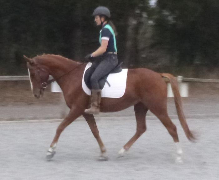 ELEGANT YOUNG GELDING, FUTURE PERFORMANCE PROSPECT