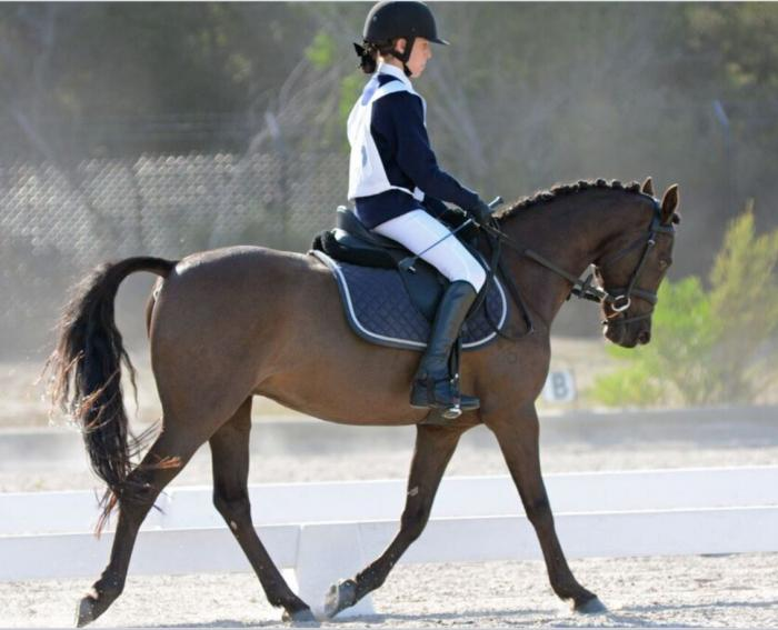 Awesome Athletic Pony-Fairlight Acres Abstract