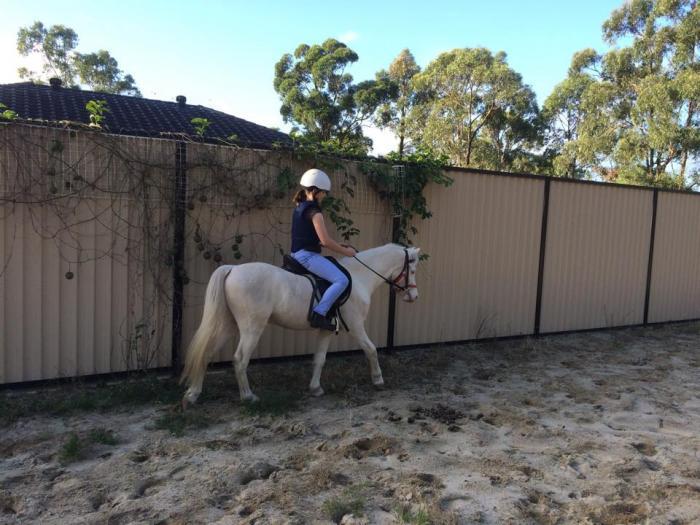 Pony Gelding Cremello 12hh
