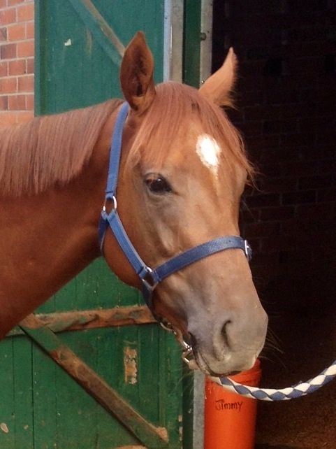 Beautiful 3 yr old filly.