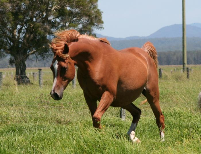 Exceptional Broodmare