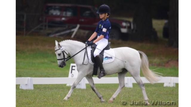 Allrounder Young Schoolmaster Pony