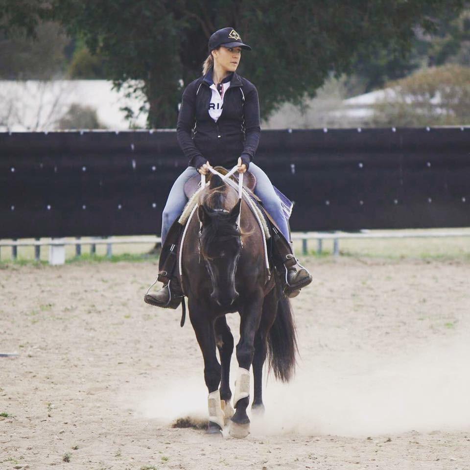 Black Stockhorse mare