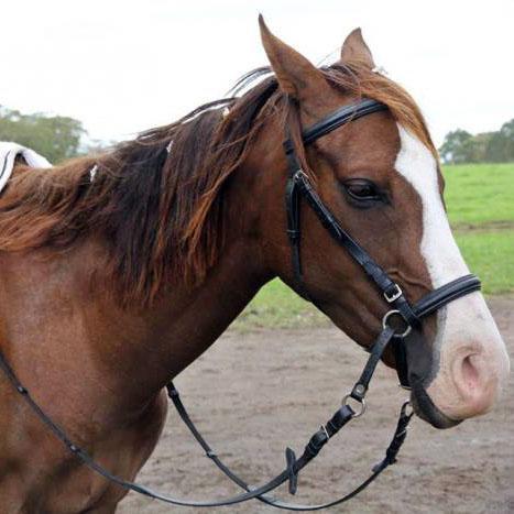 Stunning Part Arabian Pony