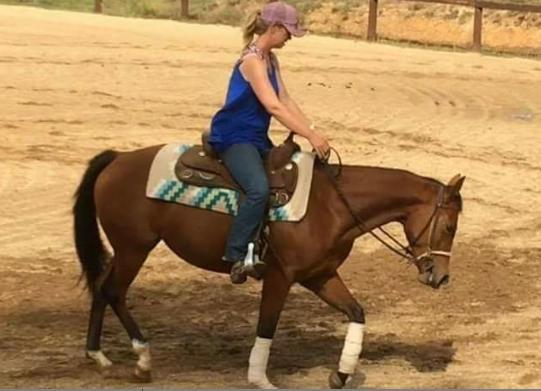 Quiet QH mare
