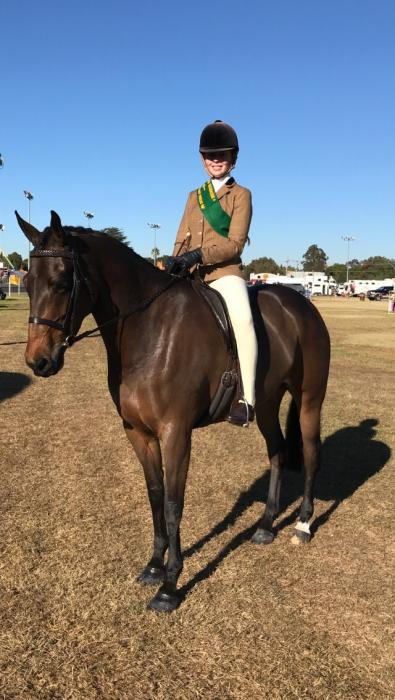 ASH Showhunter Mare - Great Interschool Prospect