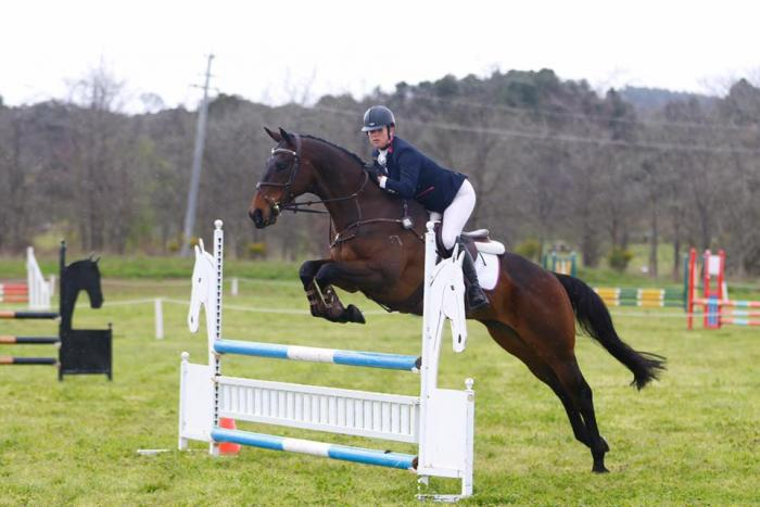 PRICE REDUCED - Lovely Young Eventer