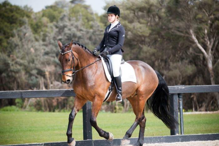 Performance Horse Ebony Park Bastian