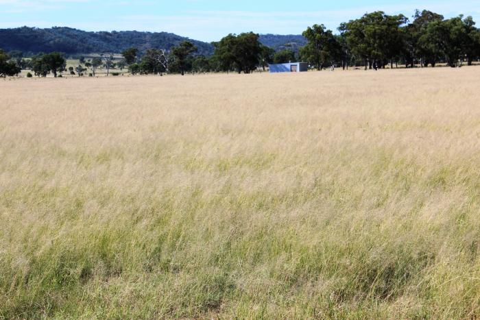 Horse Properties For Sale Warwick Qld