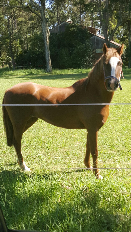 Maddie- Perfect Pony