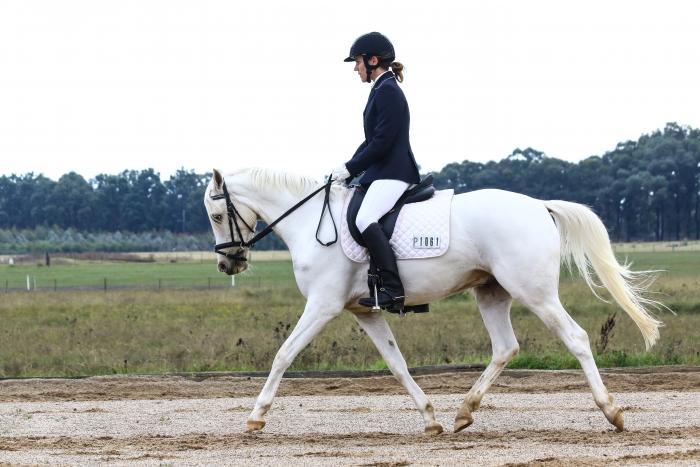 4yo ARP dressage pony gelding 14.1hh