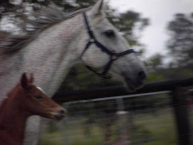 Chloe and foal Rosalie - taken 18 months ago