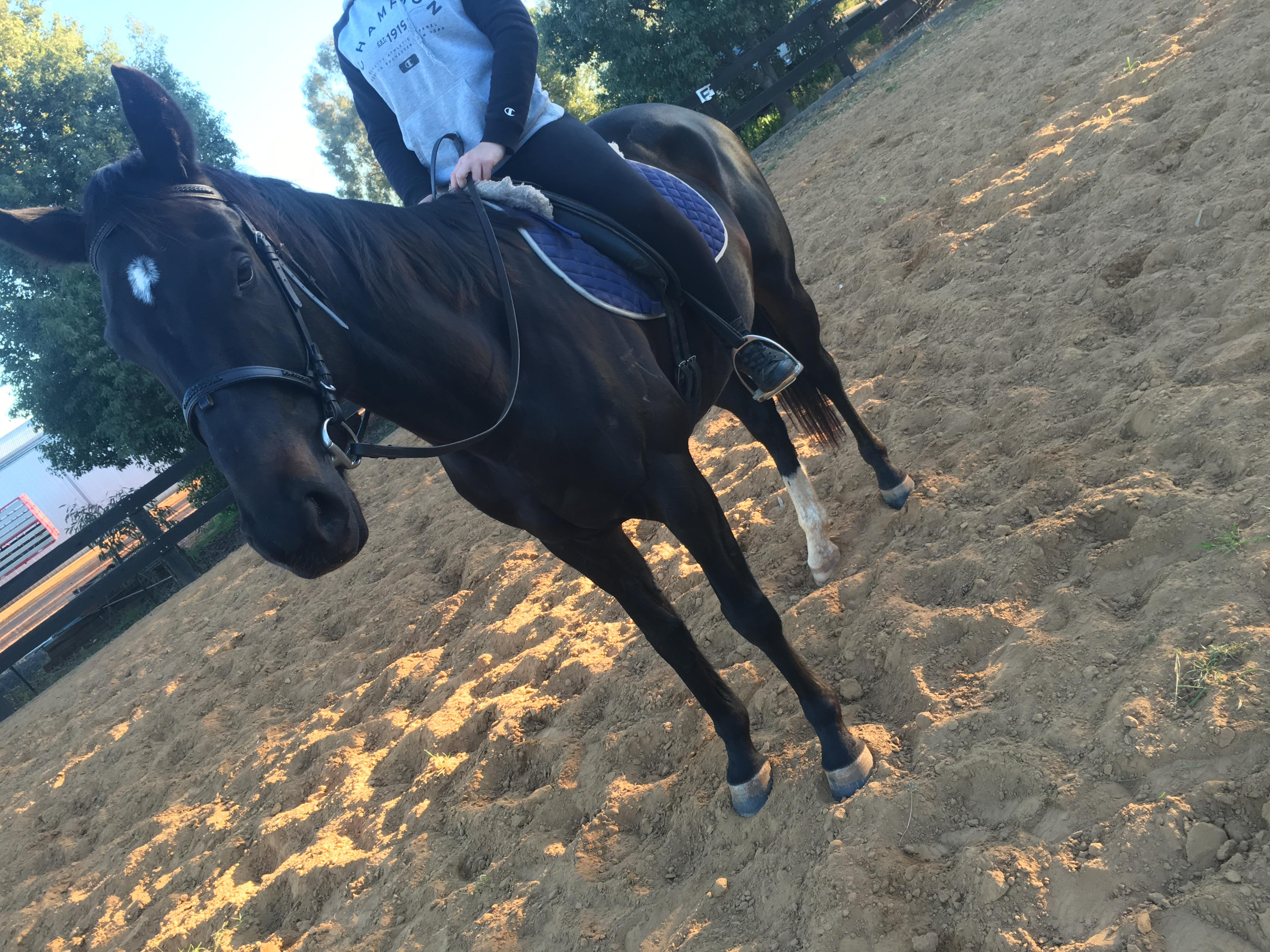 Stunning black mare