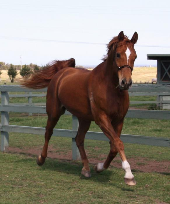 DREAM MARE FOR THE BREEDERS OF MODERN WARMBLOODS