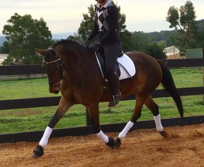 Penmain All That Jazz Riding Pony (in foal) REDUCED!!