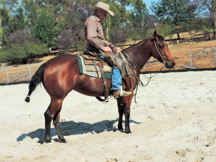 Bay QH 3yo Filly