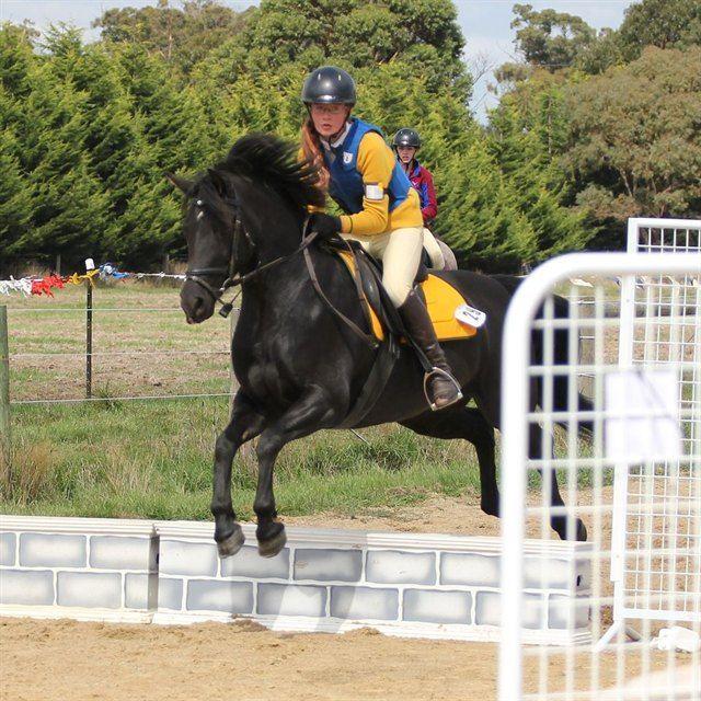 Safe Allrounder/Pony Club Mount