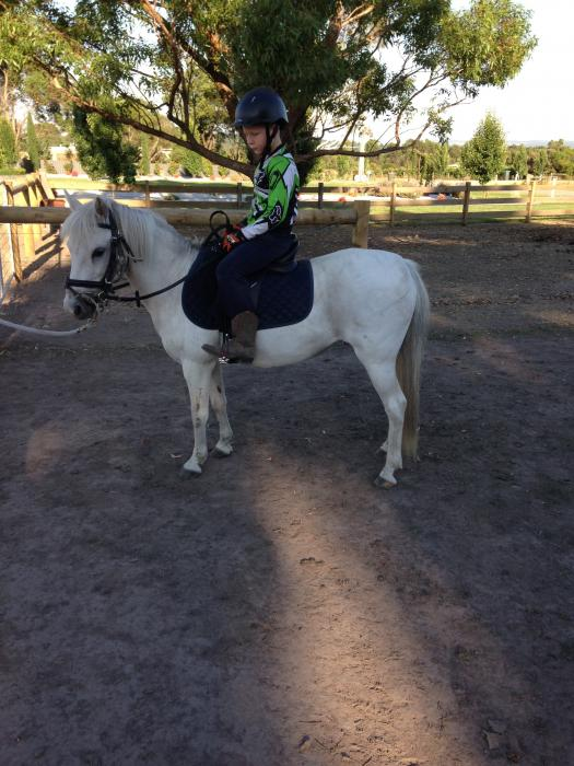 Gem Australian Riding Pony