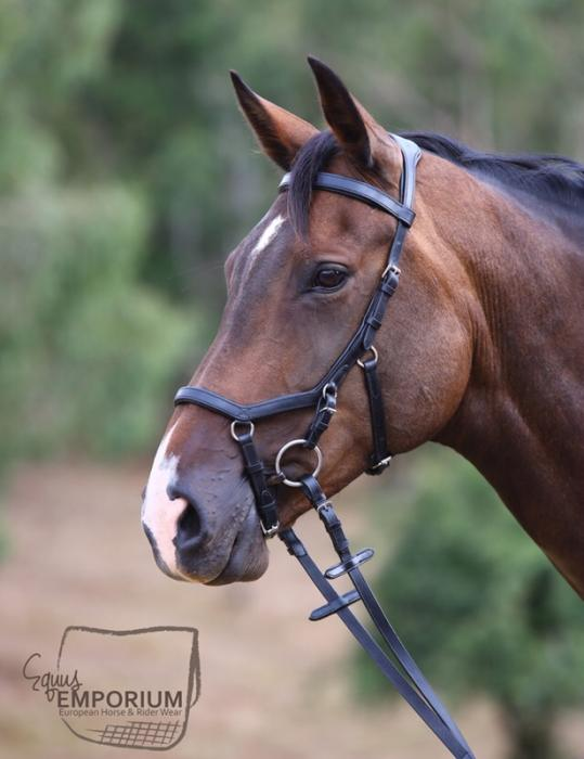 14yo, 16.2hh Registered WB x TB Mare by Clintino