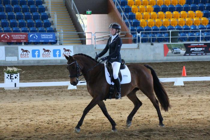 Perfect Young Rider or Lady Horse