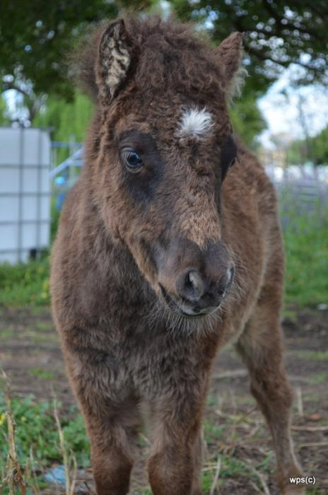 AMPS FIlly